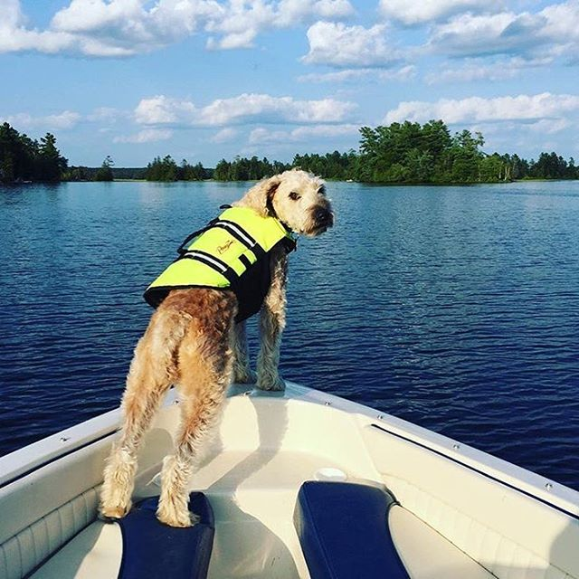 Our @linda_apexpr's dog can't wait for cottage season! And frankly, neither can we. Do your pets love summer as much as this pooch does? #nationalloveyourpetday #summerdreaming #cottagevibes #puppy #love #puppylove #boatinglife